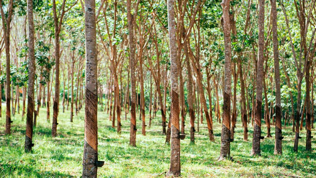 alberi-lattice