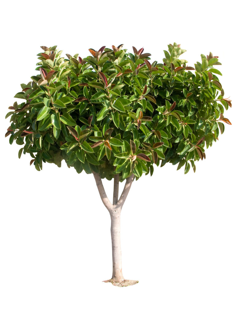 albero-lattice