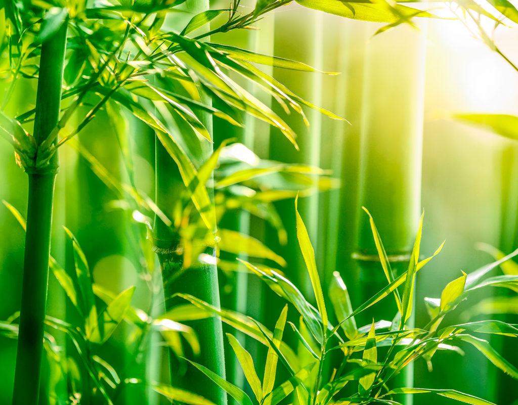 foglie-bamboo