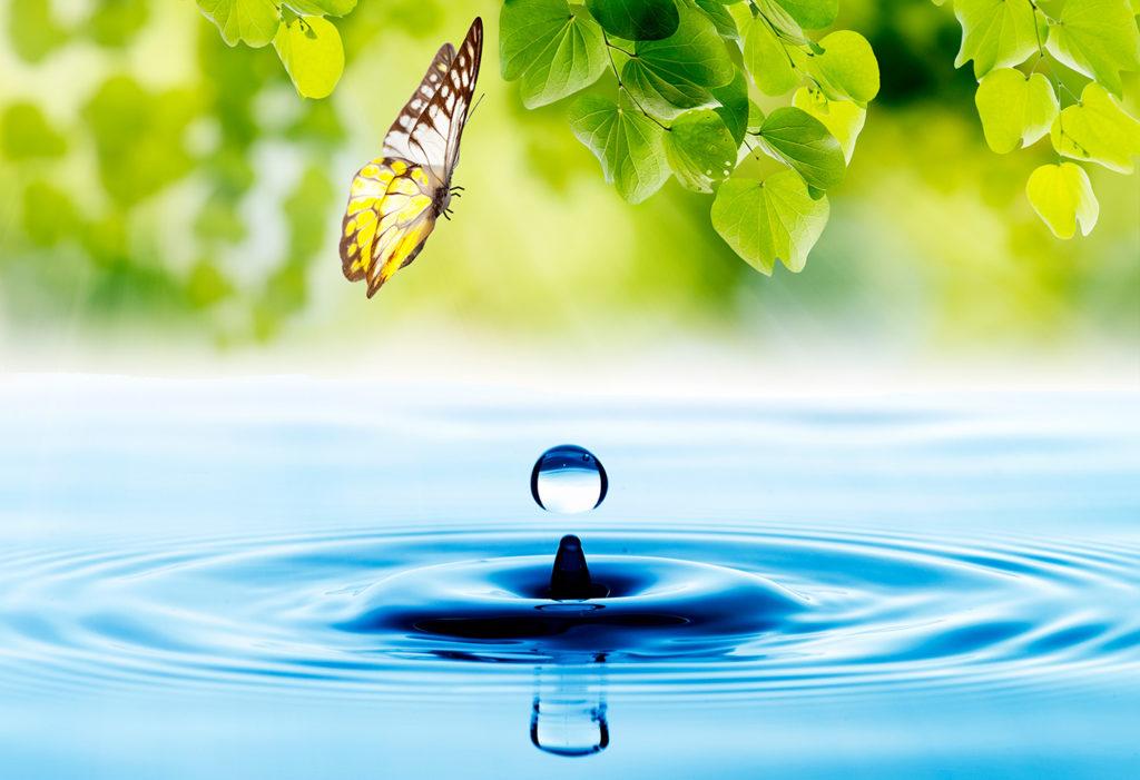 goccia-e-farfalla
